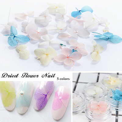1 Box 3D Nail Art Decoration Preserved Colorful Dried Flower Theme Manicure DIY