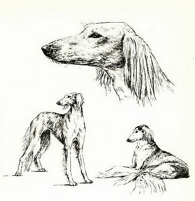 Vintage SALUKI Dog PERSIAN GREYHOUND Print Matted Gift 10x8