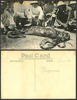 Singapore Old Real Photo Postcard Hunters Hunting Large Python SNAKE BIG STOMACH