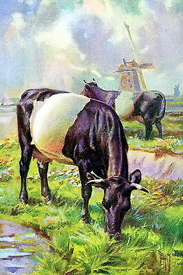 Art Print Farm Animals Black White Dutch Belted Cow Dairy Cattle Cows Windmill