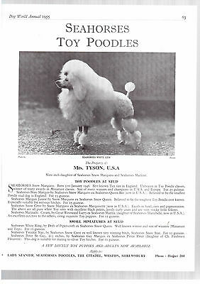 Toy poodle breed kennel clippings pedigree crufts x 100 lot 1