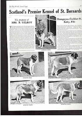 St bernard breed kennel clippings pedigree crufts x 150 lot 1 dog showing