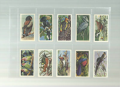 Tropical Birds - A complete set of 50 cards issued by Brooke Bond in 1961