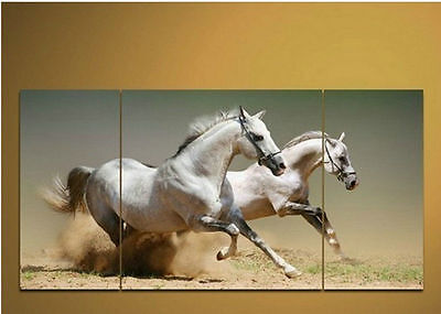 "Modern Abstract Huge Canvas Art Oil Painting ""white horses(No frame)   003"