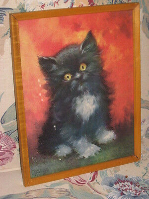 Framed Picture of Black Kitten with White Markings