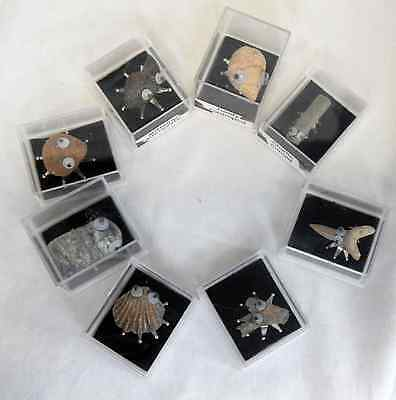 Fossil Bug Creature - Assorted Design Fossil Bugs in a Gift Box - BNIB