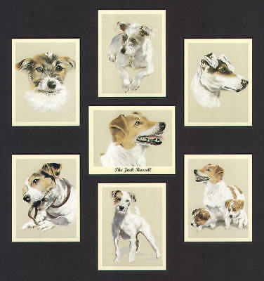The Jack Russell Dog Breed Art Print Trade Cards