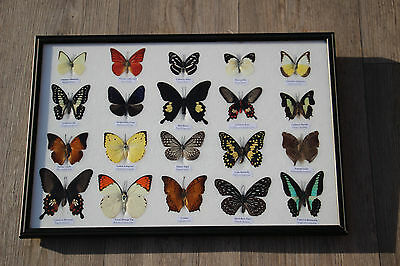 butterflies-butterfly collection 20 pieces in display frame taxidermy