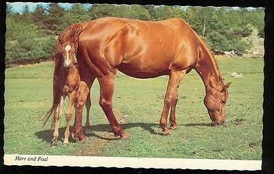 Horse, Mare and Foal (not mailed (HorseN#23