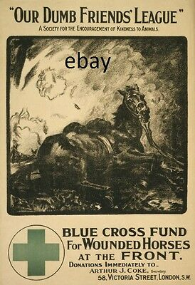 Ww1 Poster Blue Cross Fund For Wounded Horses War Horses New A4 Print
