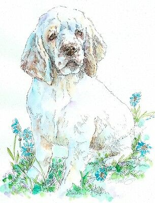 CLUMBER SPANIEL Original Watercolor on Ink Print Matted 11x14 Ready to Frame