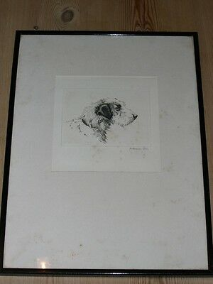 Large Sealyham Terrier Dog Etching By David Gee Signed In Pencil 1940