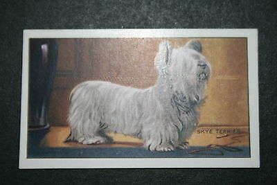 Skye Terrier   1930's Original  Vintage Coloured Card