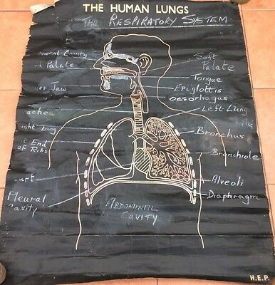 Vintage  Medical  College Wall Chart