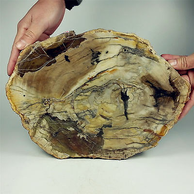 "11.45"" 2980g POLISHED PETRIFIED WOOD FOSSIL AGATE SLICE DISPLAY Madagascar A1244"