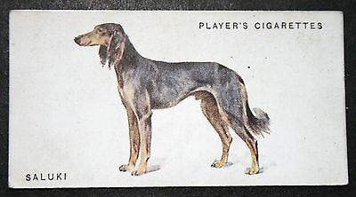 SALUKI   Early 1930's Original Vintage Illustrated Card