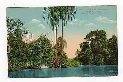 Postcard Lake Region Butuan Subprovince Island Mindanao Philippines Palm Trees