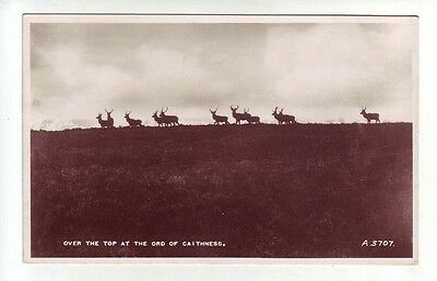 Stags Deer Over The Top At The Ord Of Caithness 1936 Real Photograph Valentines