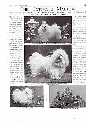 maltese breed kennel clippings pedigree crufts x 100 lot 1 dog showing
