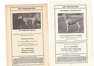 Weimaraner  breed kennel clippings pedigree crufts x 100