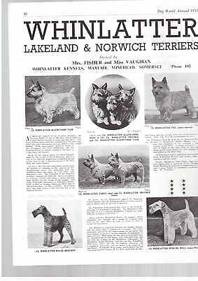 Norwich Terrier breed kennel clippings pedigree crufts x 50 lot 1 dog showing