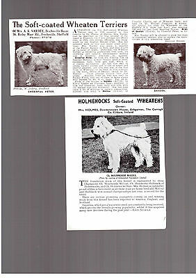Soft coated wheaten terrier breed kennel clippings pedigree crufts x 100