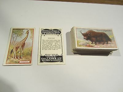 "GALLAHERS "" ANIMALS AND BIRDS OF COMMERCIALVALUE 1921""  1/2 SET +/- [s]"