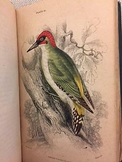 BIRDS OF GREAT BRITAIN 1stED SIR WILLIAM JARDINE 1866 VOLUME II 37 COLOUR PLATES