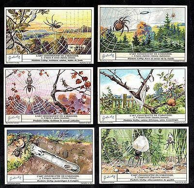 Spiders & Webs Cards Set 1935 Liebig Insect Arachnid Araignee Water