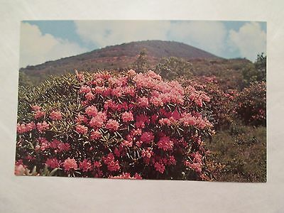 craggy gardens Blue ridge parkway North Carolina NC Postcard