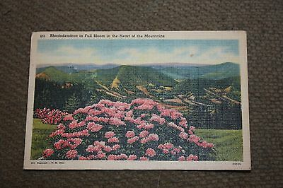 Vintage Postcard Rhododendron In Fall Bloom In The Heart Of The Mountains