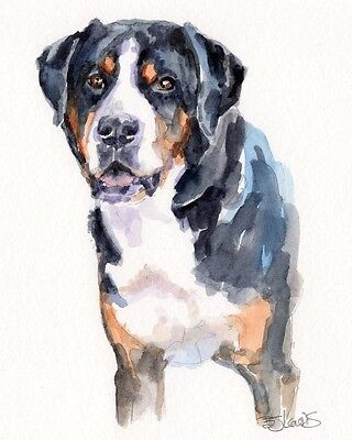 GREATER SWISS MOUNTAIN DOG Original Watercolor Double Matted 8x10 Ready to Frame