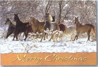 Xmas Cards HORSE HERD Snow Scene Holiday Cards NICE!