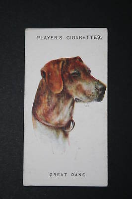 GREAT DANE 1920's Vintage Picture Card