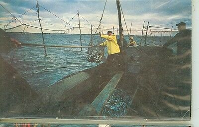 Provincetown,massachusetts-Bringing Fish Aboard From Traps-#207-(Mass-P2*)