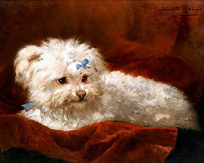 8x10 RONNER KNIP Art Print Fluffy White Dog PORTRAIT OF MALTESE in Blue Ribbons