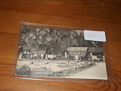 Old CEYLON  postcard our ref #55511 FIBRE DRYING JH VAVASSEUR 1909