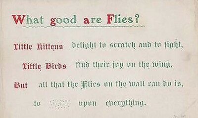 What Good Are Flies Songcard Insect Poem Proverb Kittens Little Birds Postcard
