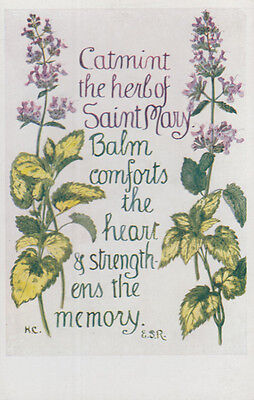 Catmint Saint Mary Herb Balm Memory Romany Natural Remedy Song Songcard Postcard