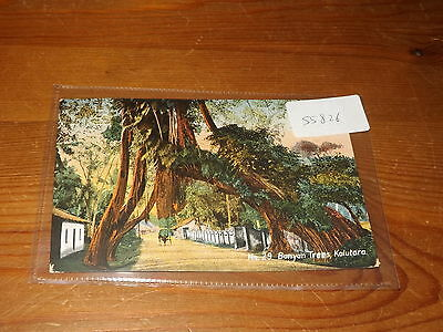 Old CEYLON  postcard our ref #55826 BANYAN TREES KALUTARA