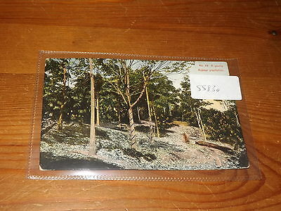 Old CEYLON  postcard our ref #55830 YOUNG RUBBER PLANTATION