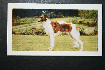 Borzoi   Russian Wolfhound       Vintage Colour Photo Card  Excellent Condition