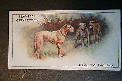 Irish Wolfhounds   Original 1920's  Vintage Illustrated Card
