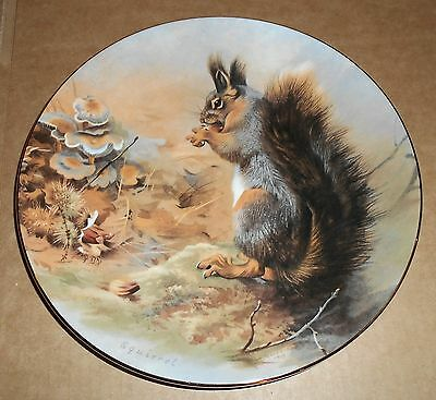 Royal Worcester Fine China Squirrel Design Plate