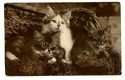 vintage cat postcard Sheahan beautiful trio cats kittens pose