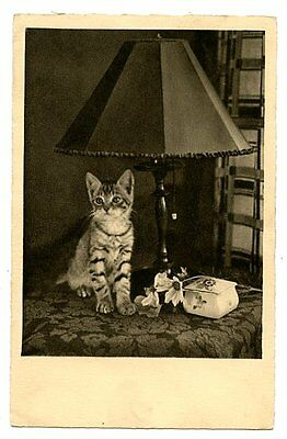 vintage cat postcard real photo tabby cat kitten sat under antique lamp w flower