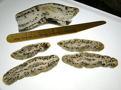 Montana Agate Slabs 5 Piece Group Solid Material w/ Lots of Dendrites