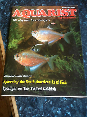 AQUARIST & PONDKEEPER -May 1981,Spawning the south American Leaf fish