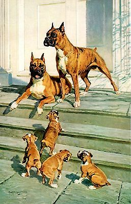 Vintage 1958 Pitbull Terrier Puppies Liter Dogs Work for Man R E Lougheed Print