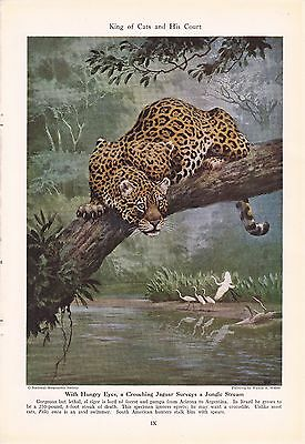 1943 Jaguar - King of Cats and His Court - Vintage Walter A Weber Print